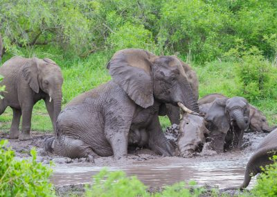 African elephant waterhole south africa kruger safari