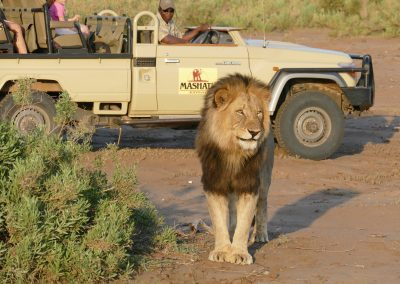 African lion game drive safari vehicle wildife safari tuli mashatu L1050138