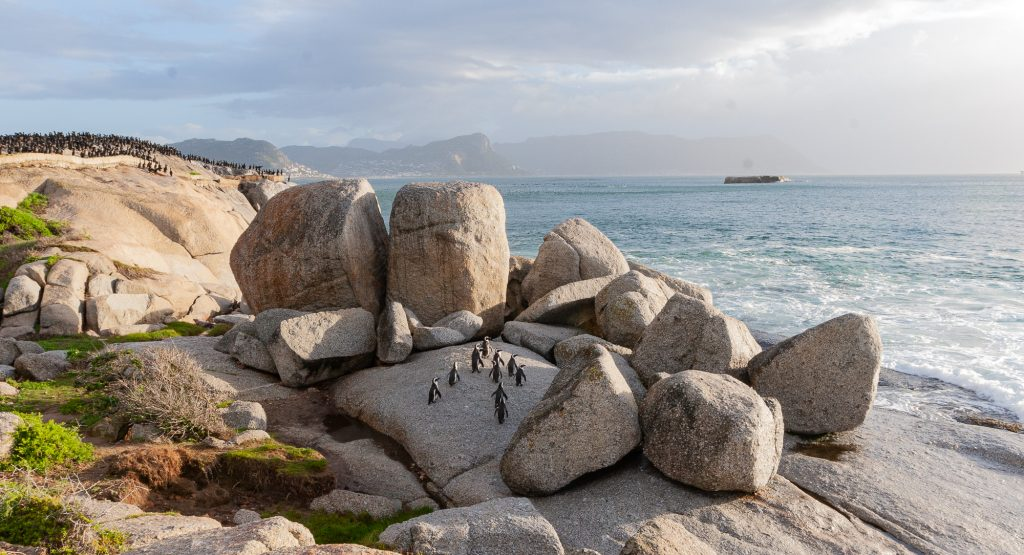 Cape Town Tour Simons Town Penguins boulders beach birding tour
