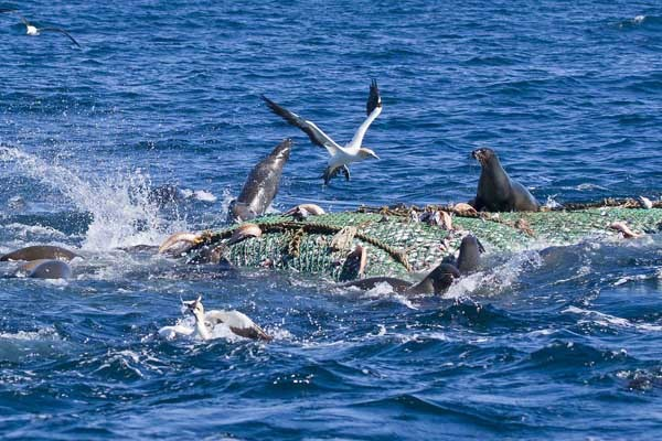 Pelagic Scene off Cape Point: Trawl being retrieved