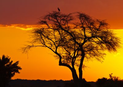 Sunset african bushveld Kruger bird tour wildlife safari south africa