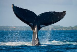 WHALE TOURS CAPE TOWN SOUTH AFRICA