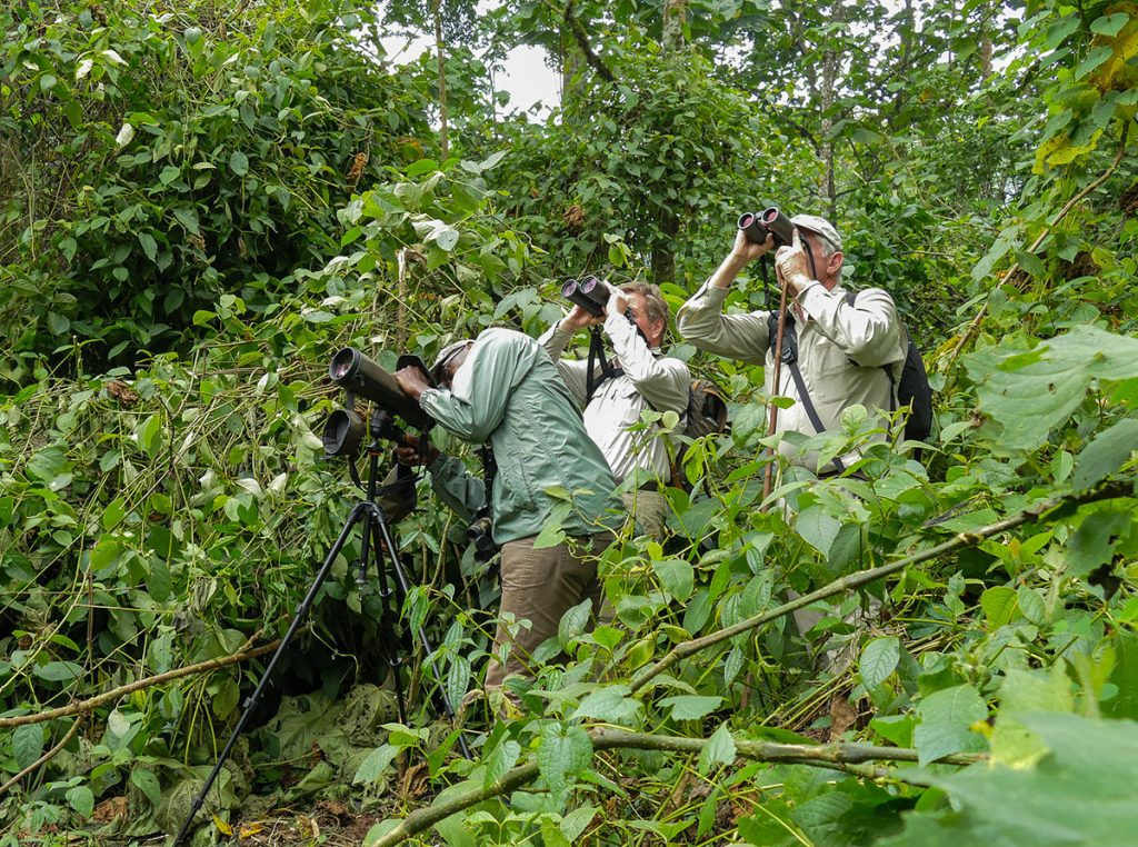 birding wildlife safaris southern africa avianleisure