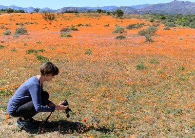 spring wild flower tour west coast namaqualand biedoux valley south africa