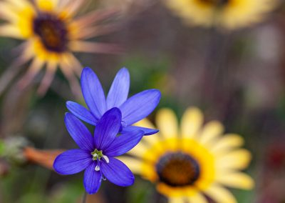 spring wild flowers west coast flower tour