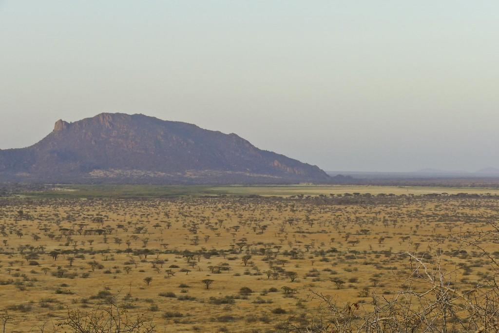 Savanna in Shaba Reserve, Golden Pipit habitat